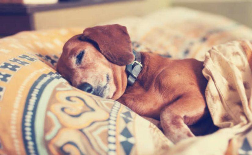 empecher-chien-lit
