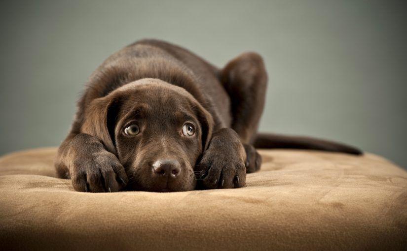 Pourquoi et comment s'exprime la peur chez un chien ?
