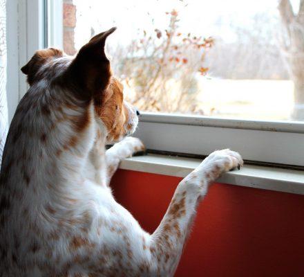 chien de garde