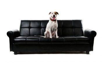 chien mange meuble