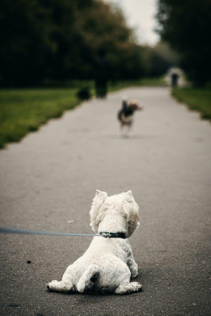 comportement chien bizarre